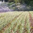 impianti-irrigazione5