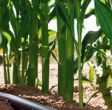 impianti-irrigazione6