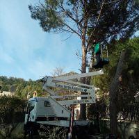 Camion-Cestello