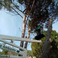 potatura-alberi-cagliari