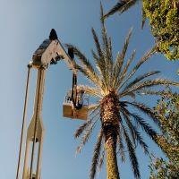 potatura-palme-cagliari