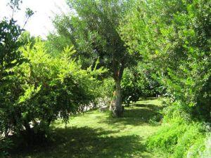progettazione-giardino1